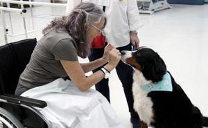Perros que ayudan a curar en Valencia