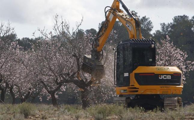 Un sexto brote de Xylella afecta a 47 parcelas de almendros en Alicante