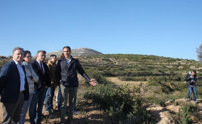 Un manto vegetal frena la erosión de la zona de la Granadella calcinada en 2016