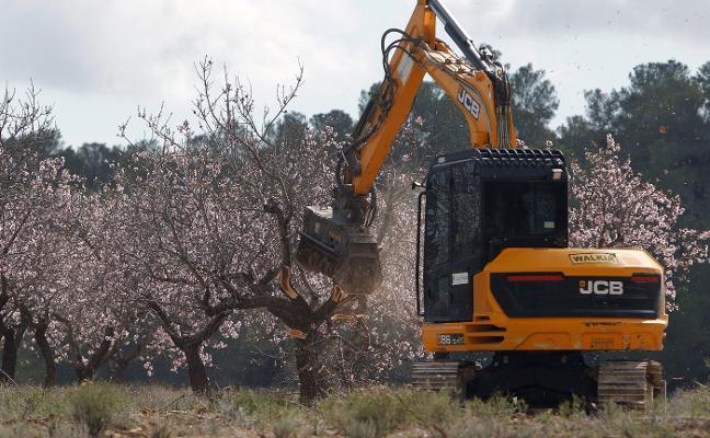Agricultura confirma el sexto brote de Xylella fastidiosa en la Comunitat