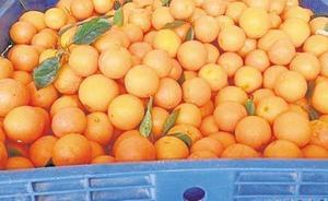 El último golpe policial a la naranja ilegal: 120.000 kilos inmovilizados y 18 detenidos