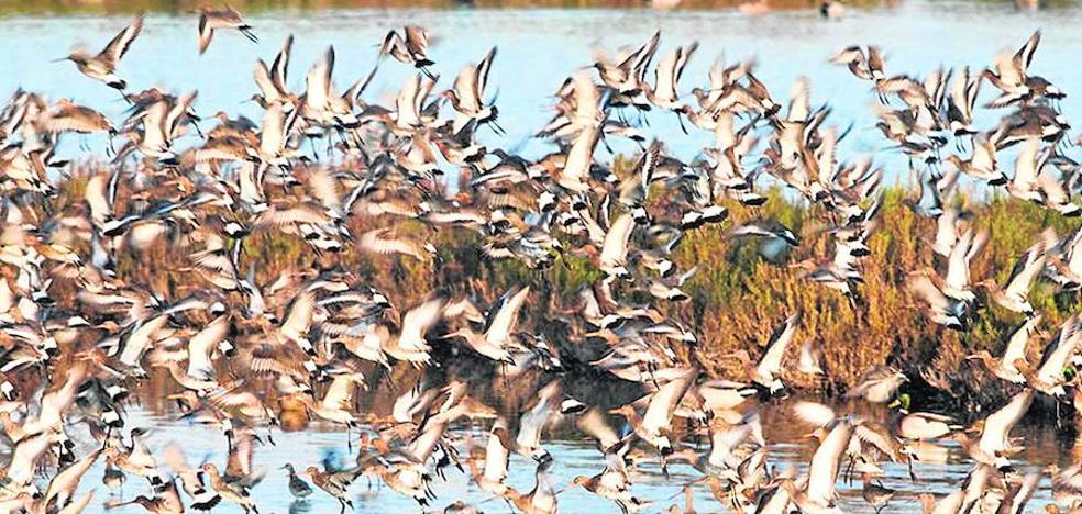Una zona perfecta para disfrutar del turismo ornitológico
