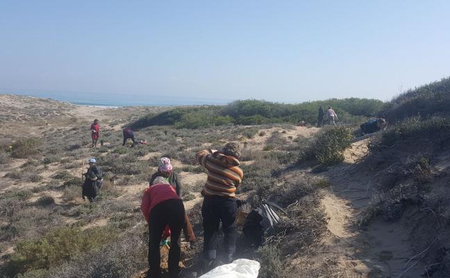 Una jornada popular planta 180 enebros marinos en la Devesa