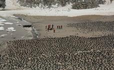 Descubren más de 1,5 millones de pingüinos adelaida en el océano Antártico