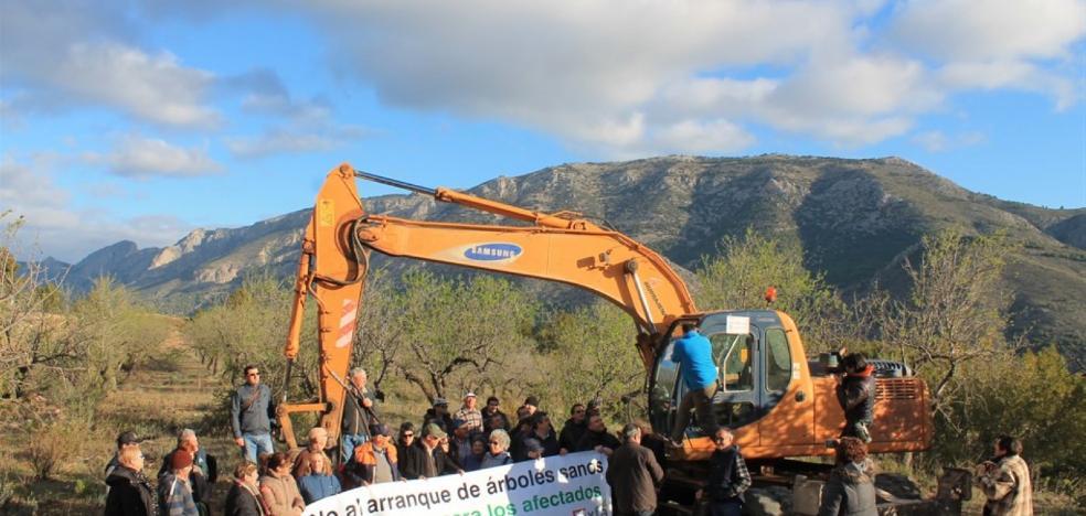 Vecinos de La Marina paran el arranque de almendros afectados por la Xylella