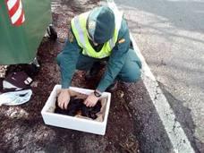La Guardia Civil rescata a cinco cachorros arrojados a la basura