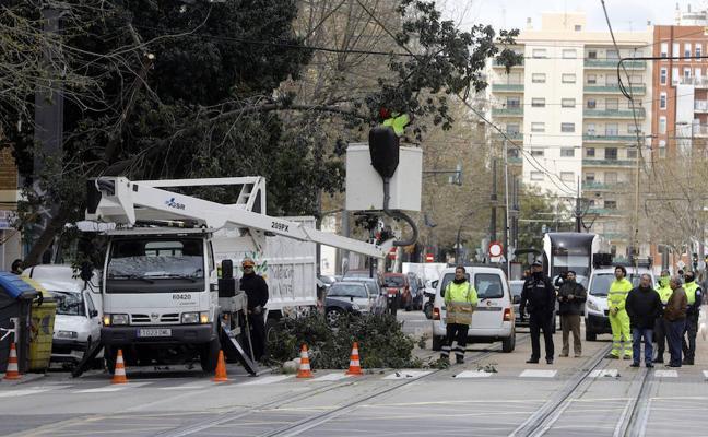 Restablecida la circulación del tranvía en Valencia tras caer un árbol por el viento
