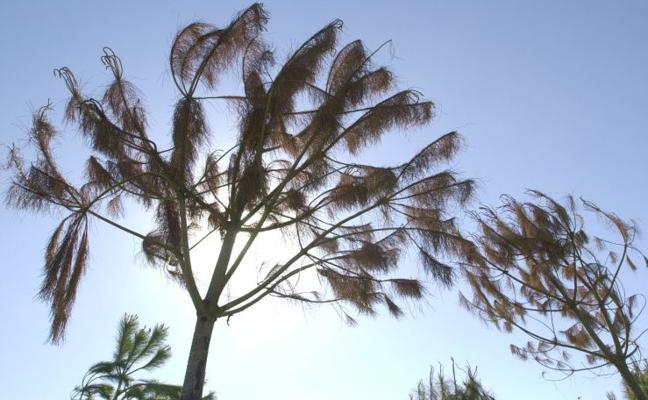 5 rutas para descubrir Valencia a través de sus árboles más impresionantes