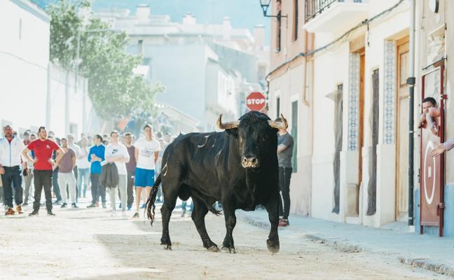 El V aniversario del Bou de Pasqua de Benifairó reunirá a las mejores ganaderías