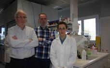 Investigadores valencianos desarrollan un sistema para provocar la muerte de las células cancerígenas
