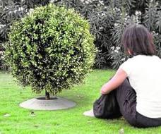 Urnas biodegradables que se convierten en árboles