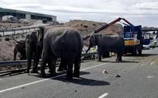 Fallece un elefante y otros 2 heridos por el vuelco del camión en la A-30
