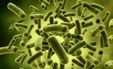 Descubren cómo evolucionan las comunidades bacterianas tras colonizar un nuevo ambiente