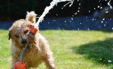 Tu mascota sufre en primavera: consejos para evitarlo