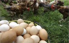 Mercadona pone a la venta huevos de gallinas libres de jaula