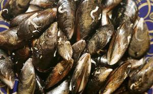 Una intoxicación por consumo de mejillones deja 39 afectados en Xàbia