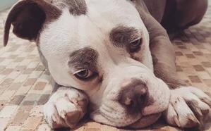 El perro más triste de internet