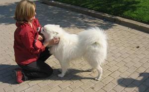 Viveros acoge Famas Fest, el primer festival para familias y mascotas de Europa