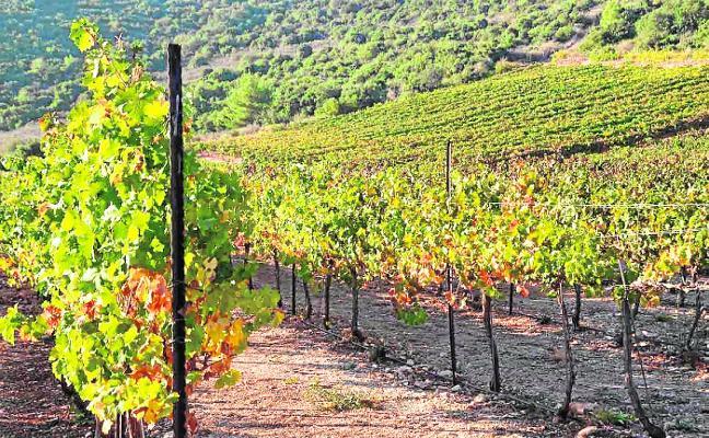 El cava valenciano planea elevar un 25% su producción frente a la presión catalana