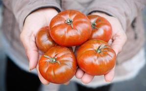 Investigadores valencianos descubren una forma fácil y barata de cultivar tomates con más sabor y más nutritivos