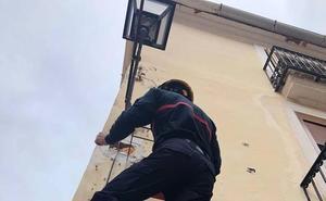 Los bomberos rescatan a una tórtola atrapada en una farola de Dénia