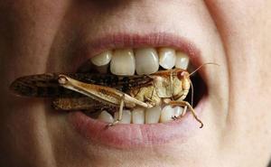 Cada persona se come casi un kilo de insectos al año sin saberlo
