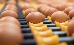 Huevos Guillén compra a Ivace 5.000 metros para ampliar sus instalaciones