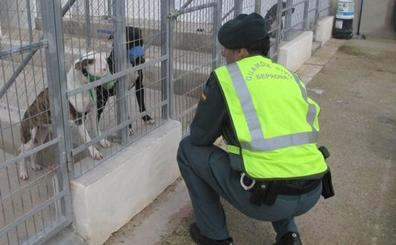 Condenado a dos años y dos meses de cárcel el dueño de cinco perros que atacaron mortalmente a un agricultor en Beniarbeig