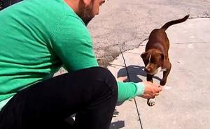 Deniegan la adopción de un cachorro a una pareja de octogenarios porque se les había escapado otro perro antes