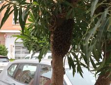 Aparece otro enjambre de abejas en el centro de Dénia