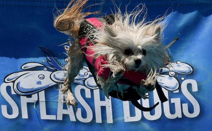 Salta dog, salta