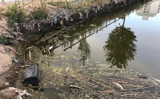Aparecen decenas de peces muertos en un lago de Tavernes