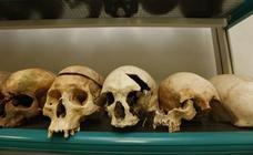 Los huesos hablan: así se investiga un crimen