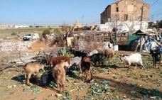 PACMA denuncia al Ayuntamiento por presuntos delitos de maltrato animal y prevaricación