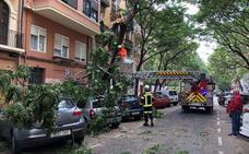 Cae parte de un árbol en una calle de Valencia