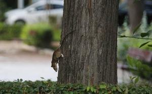 Cs alerta del aumento de ratas en Valencia