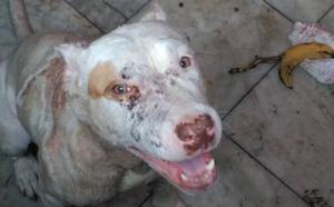 Rescatan a cuatro perros desnutridos y con heridas en una casa okupada por un joven