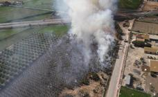 Un incendio arrasa 2.500 palmeras en Catral y quema la cara de un bombero