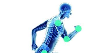 «La acción regenerativa de las células madre mesenquimales mejora alteraciones articulares»
