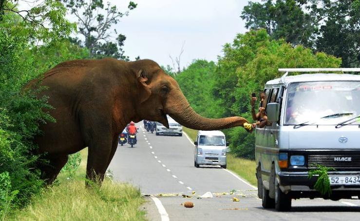 16 imágenes sorprendentes del mundo animal