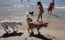 La playa canina de Pinedo abre a partir de este viernes