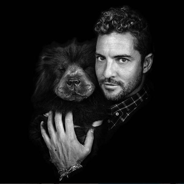 Fotos de David Bisbal