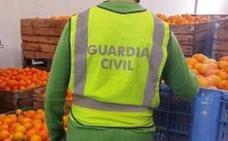 Acusadas siete personas del robo de 29.300 kilos de naranjas en Valencia