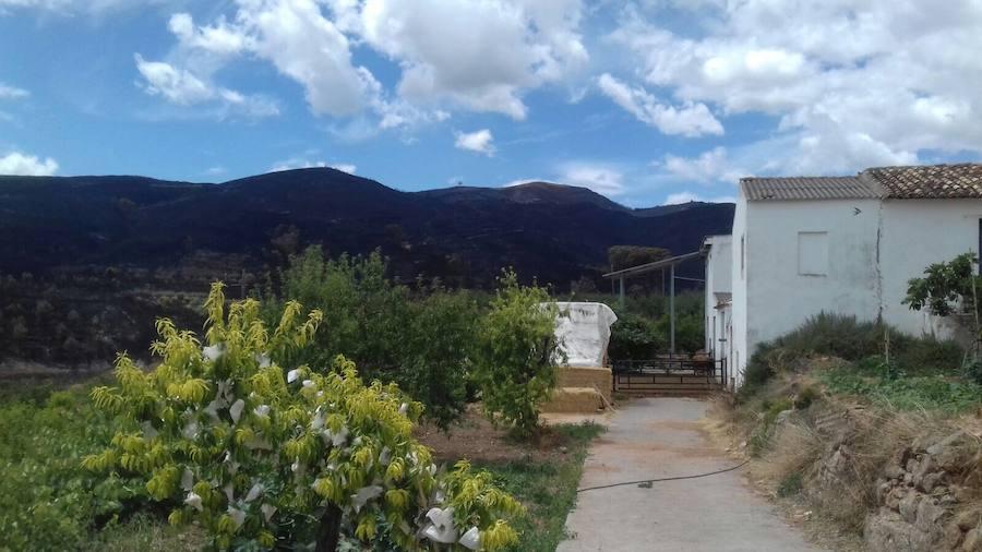 Fotos de la Sierra Calderona tras el incendio de Gátova