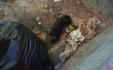 Detenido por torturar y matar a un cachorro de gato y agredir a una mujer que se lo recriminó