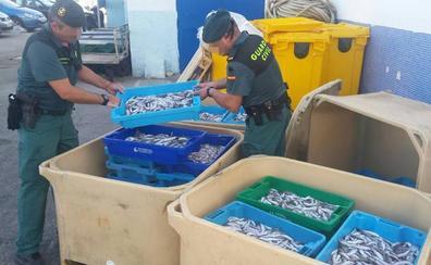 Decomisan 300 kilos de pescado fresco inmaduro en Altea