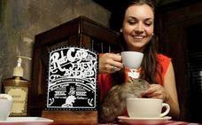 Tomar un café con ratas ya es posible en San Francisco
