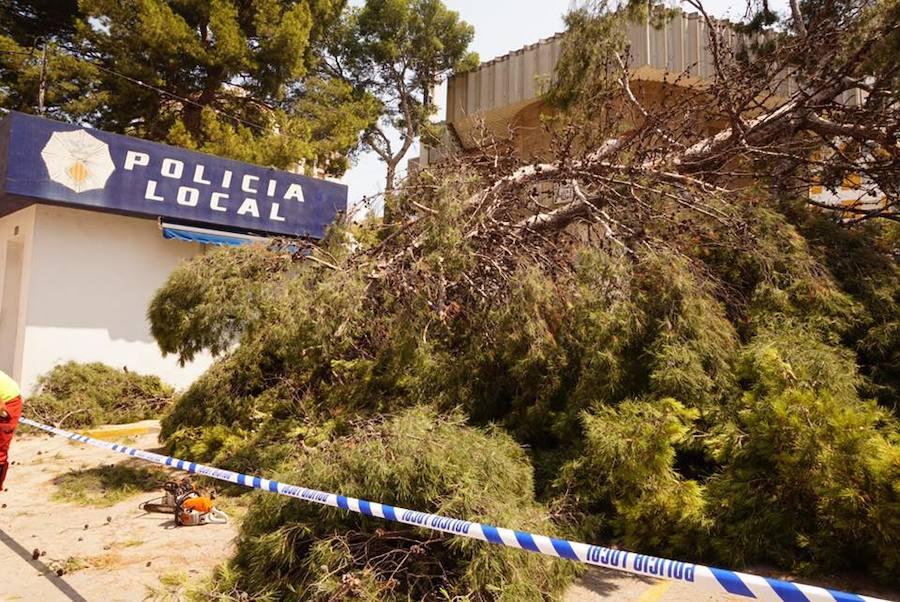 Fotos del árbol caído en Cullera