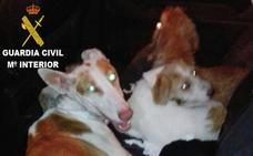 Detenidos en Torrent mientras transportaban en el maletero 4 perros robados en Aielo de Malferit