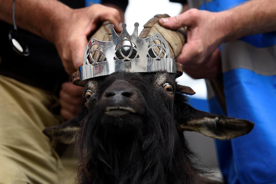 Fotos del festival Puck Fair, una de las tradiciones más antiguas de Irlanda